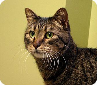 Domestic Shorthair Cat for adoption in Hastings, Nebraska - Jewel