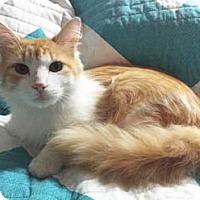 Adopt A Pet :: Pepperoni - Merrifield, VA