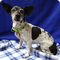 Adopt A Pet :: Dory - Seal Beach, CA