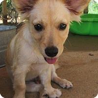 Adopt A Pet :: EVERETT - Brookside, NJ