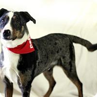 Adopt A Pet :: Russell - Dalton, GA