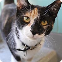 Adopt A Pet :: Dory - Bradenton, FL