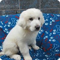 Adopt A Pet :: Dudley - Bartonsville, PA