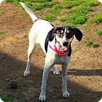 Adopt A Pet :: Camy - Shreveport, LA
