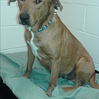 Adopt A Pet :: Lucy - Barnwell, SC