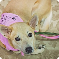 Adopt A Pet :: Diva - St. Catharines, ON