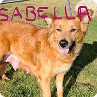Adopt A Pet :: Isabella - Agoura Hills, CA