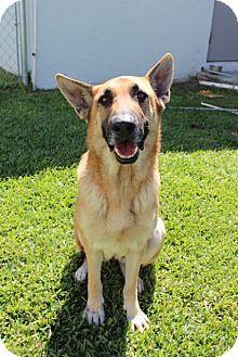 German Shepherd Dog Dog for adoption in Edgewater, New Jersey - Samantha