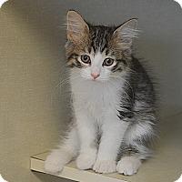 Adopt A Pet :: Mars - San Leon, TX