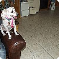Adopt A Pet :: Rykee - Wahoo, NE
