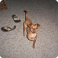 Adopt A Pet :: China - Hancock, MI