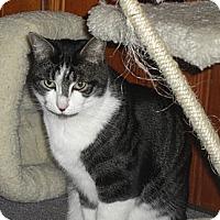 Adopt A Pet :: Darius (SO) - Little Falls, NJ