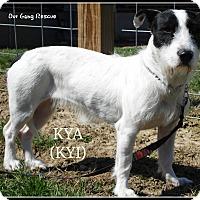 Adopt A Pet :: Kya - Cincinnati, OH