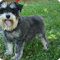 Adopt A Pet :: Lola and Mini (bonded pair) - Staunton, VA
