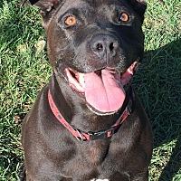 Adopt A Pet :: BIJOU - Ojai, CA