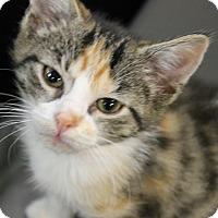 Adopt A Pet :: Lilo - Medina, OH