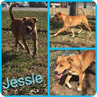 Labrador Retriever Mix Dog for adoption in Alvarado, Texas - Jessie