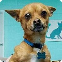 Adopt A Pet :: Roscoe Diego - Hockessin, DE