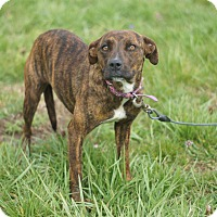 Adopt A Pet :: Chloe - Columbia, TN