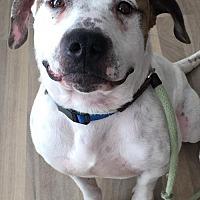 Adopt A Pet :: Bronco - San Diego, CA
