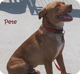 Terrier (Unknown Type, Medium)/Field Spaniel Mix Dog for adoption in Weatherford, Oklahoma - PETE
