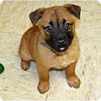Adopt A Pet :: Kahula - Racine, WI