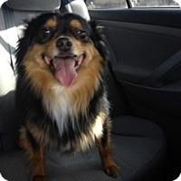 Adopt A Pet :: Mooch ~Prison Obedience Traine - Hazard, KY
