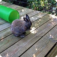 Adopt A Pet :: Ben - West Palm Beach, FL