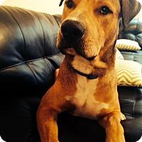 Adopt A Pet :: Moose - Houston, TX