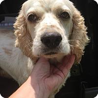 Adopt A Pet :: Happy - St. Petersburg, FL