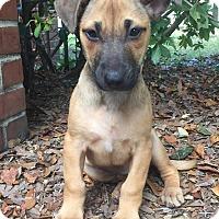 Adopt A Pet :: Vivian - Gainesville, FL