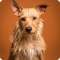 Adopt A Pet :: Wally Meet Me!!! - Norwalk, CT