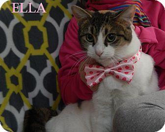 Domestic Shorthair Cat for adoption in Bucyrus, Ohio - Ella