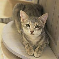 Adopt A Pet :: Mic - Hammond, LA
