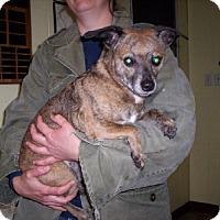 Adopt A Pet :: Tigger - Aurora, IL