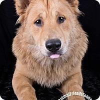 Adopt A Pet :: Freddie - Lodi, CA