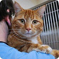 Adopt A Pet :: Butters - THORNHILL, ON