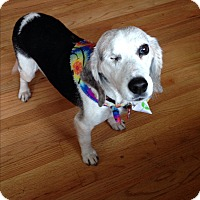Adopt A Pet :: Betsy - Wilmette, IL