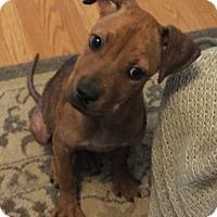 Adopt A Pet :: Arthur - Fort Collins, CO