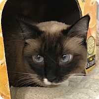 Adopt A Pet :: Penelope - Valley Center, CA