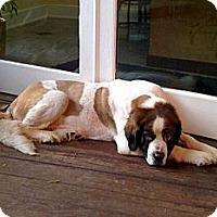 Adopt A Pet :: Praline--adopted!! - New Richmond, OH
