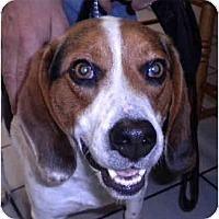 Adopt A Pet :: Charley - Indianapolis, IN