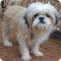 Adopt A Pet :: Key - Athens, GA