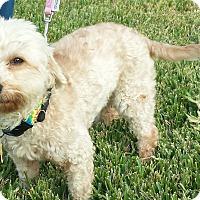 Adopt A Pet :: Jill - Kingwood, TX