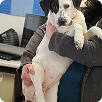 Adopt A Pet :: McKenzie - Marietta, GA