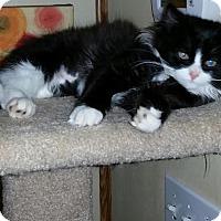Adopt A Pet :: Isles - McDonough, GA