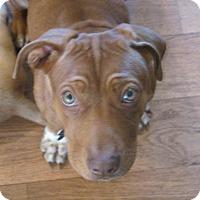 Adopt A Pet :: Cinnamon - Franklin, VA