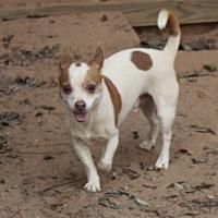Adopt A Pet :: Chewbacca - Evans, GA