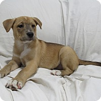 Adopt A Pet :: Marilyn - Randolph, NJ