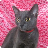 Adopt A Pet :: Nina - Lloydminster, AB